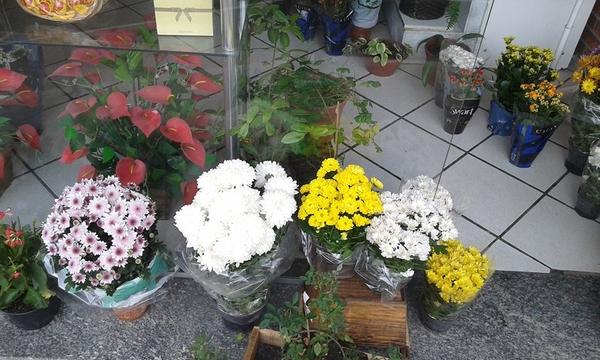 Flores Naturais