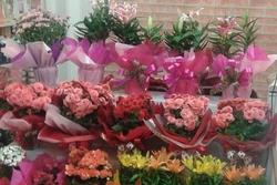 Plantas para Presentes