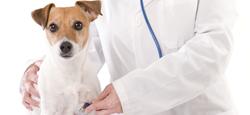Atendimento de Urgência e Emergência de Animais