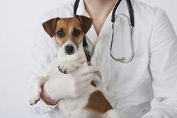 Exames Laboratoriais de Animais